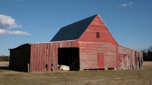 tobacco-barns